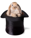 Rabbit_in_a_hat